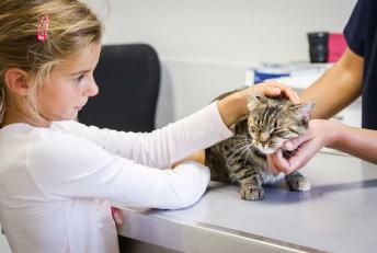 Mon vétérinaire sur Angers