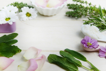 plantes-phytotherapie-medecine-alternative