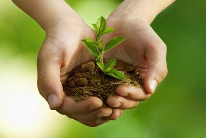 Plantes arbre nature